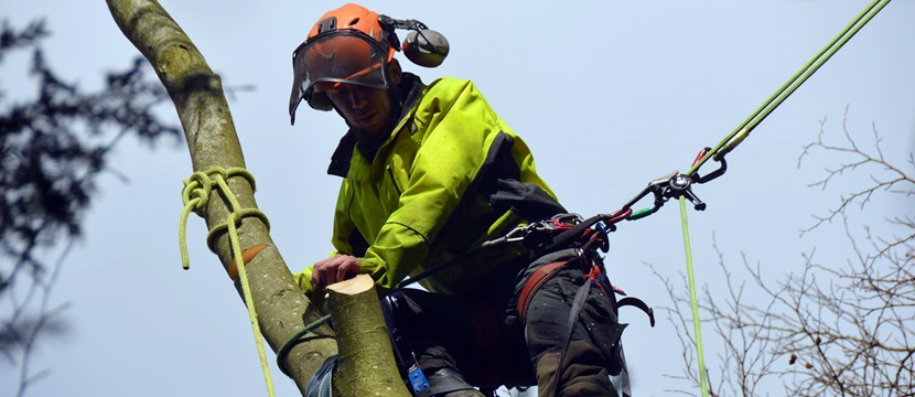 Arborist Tree Surgeon up a tree in Andover area