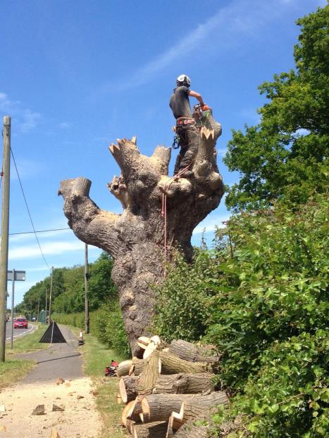 Arb Approved Tree Surgeons in Wiltshire