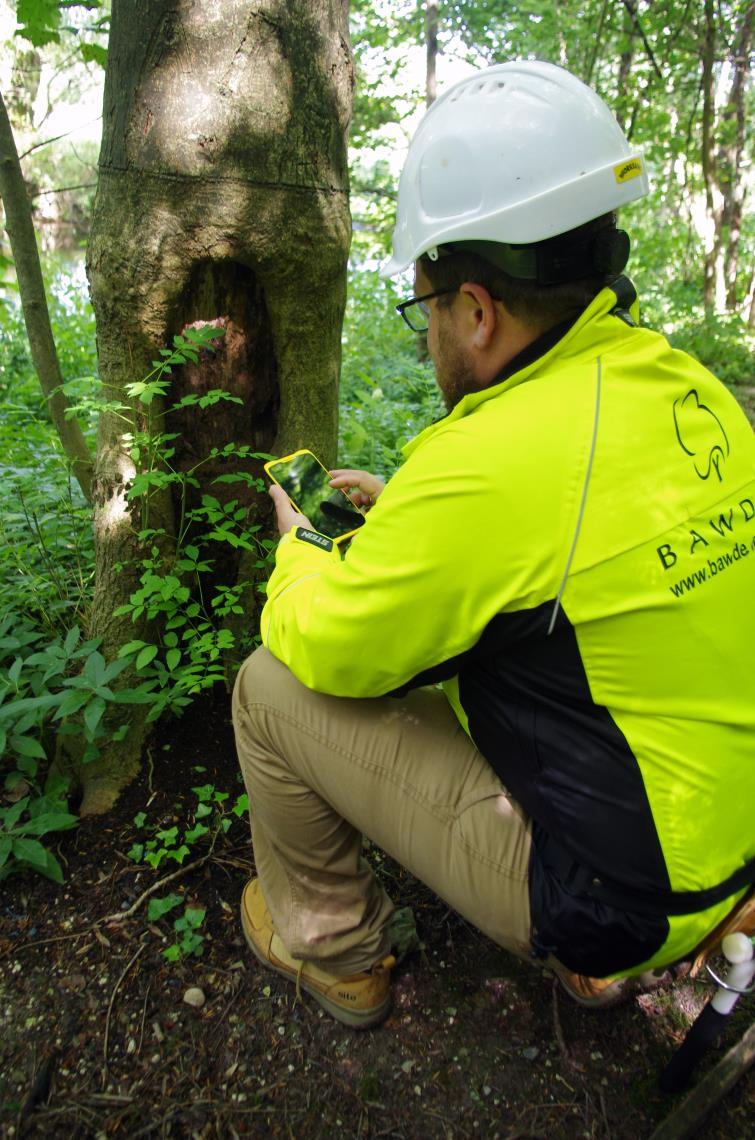 Tree surveys and reports Bawden Tree Care