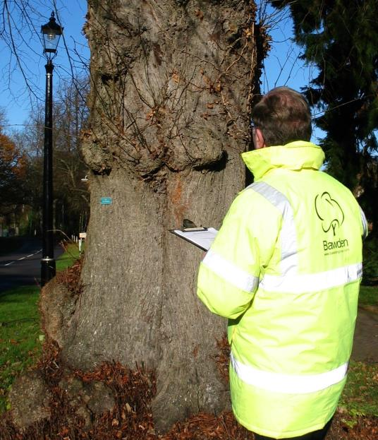Tree survey inspection for internal decay.